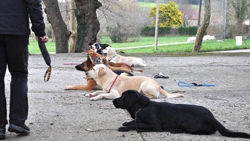 Clases de modificación de conducta canina por 8€