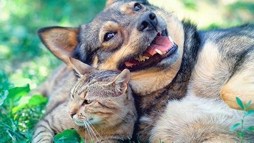 Consulta veterinaria + Vacuna de la rabia + Desparasitación