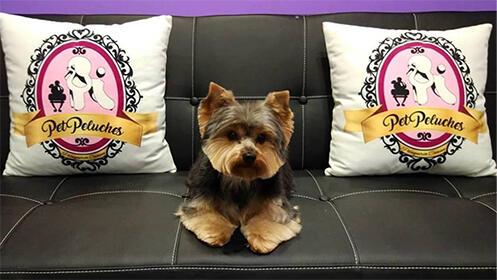 Sesión completa de belleza para tu perro con sesión de spa y masaje